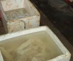 Phát hiện gần 400kg phụ phẩm trâu, bò đang ngâm hóa chất ở TP.HCM