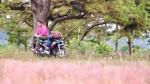 Cánh đồng cỏ hồng tuyệt đẹp trên cao nguyên đại ngàn Gia Lai