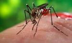 TP.HCM: Ghi nhận thêm 5 trường hợp mắc Zika