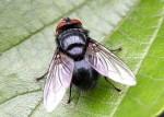 Ruồi muỗi khiếp vía không dám thò đầu vào nhà bạn chỉ nhờ thứ này