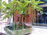 Bày đúng vị trí để 2 loại cây này trong nhà - rước PHÚ QUÝ, TÀI LỘC vào nhà