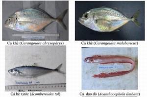 Hình ảnh các loại hải sản sống ở tầng đáy 4 tỉnh miền Trung