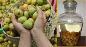 Cách ngâm táo mèo mật ong trị bách bệnh về tiêu hóa, đau đầu