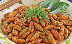 Cảnh báo an toàn sức khỏe cần tránh khi ăn nhộng tằm