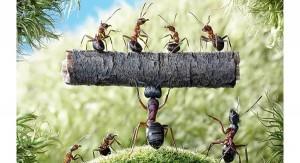 Câu chuyện về con kiến và bài học quản trị sâu sắc bạn nhất định phải đọc nếu muốn thành ông chủ