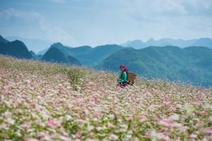 Những địa điểm check-in đẹp dọc Việt Nam vào mùa thu
