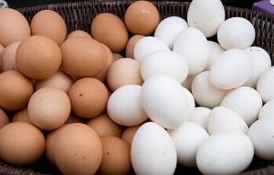 Sự khác nhau giữa trứng gà trắng và nâu