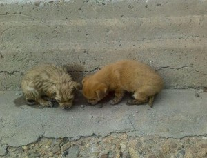 Sự thật rơi nước mắt đằng sau việc chú chó nhỏ liên tục chạy đi xin ăn