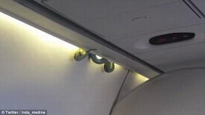 Rắn bò lổm ngổm trên máy bay khiến hành khách phát hoảng