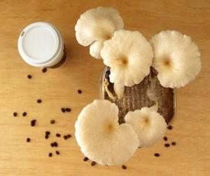 3 cách trồng nấm cực đơn giản, 5-10 ngày là có thể ăn ngon lành