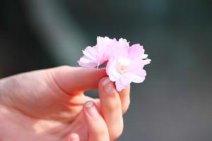 6 bài thuốc rẻ tiền giúp phụ nữ đẹp hơn