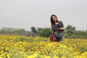 Đắm chìm trước vẻ đẹp nao lòng của cánh đồng hoa cúc