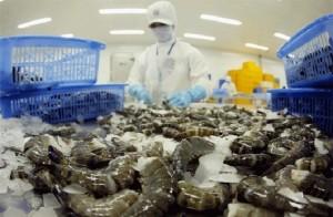 Australia cấm nhập khẩu tôm châu Á, DN Việt gặp khó