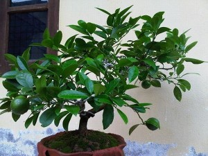 Không trồng cây này trong nhà bạn đã sống phí cả đời