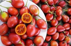 Cà chua triệu đồng một kg, bà nội trợ Việt vẫn săn mua