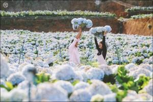 Đến Đà Lạt những ngày này mà không ghé cánh đồng hoa cẩm tú cầu đẹp như trời Tây thì ở nhà còn hơn