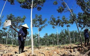 Doanh nghiệp Việt bị lừa ở Lào, Campuchia vì tin 'cò' dự án