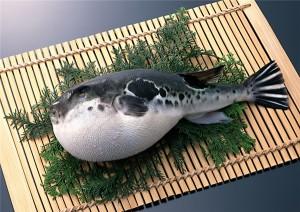 Nổi da gà trước 8 món đặc sản kinh dị chỉ có ở Nhật Bản