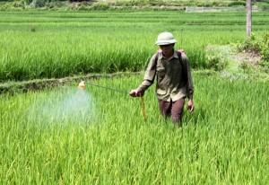 Sự thật kinh hoàng về thuốc diệt cỏ paraquat Bộ NN&PTNT vừa cấm