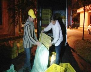 Lạng Sơn: Bắt giữ hàng nghìn gà giống nhập lậu từ Trung Quốc