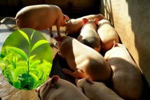Thực phẩm hữu cơ: Đắt có 'xắt ra miếng'?