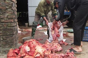 Bêu tên 14 cơ sở giết lợn chết, tiêm thuốc, bơm nước vào gia súc
