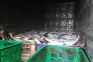 Đã tìm ra nguyên nhân khiến cá chết hàng loạt trên sông Chà Và
