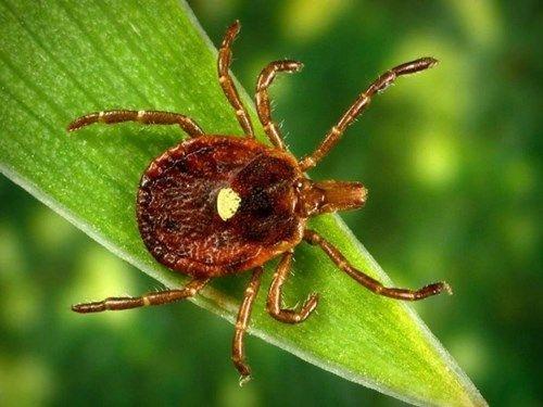 Chỉ với 1 vết cắn của loại bọ này, bạn sẽ trở thành tín đồ ăn chay