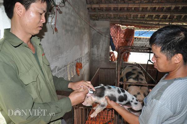 Giá lợn hôm nay 14.7: Lên 36.000 đồng/kg, sốc vì không còn lợn bán