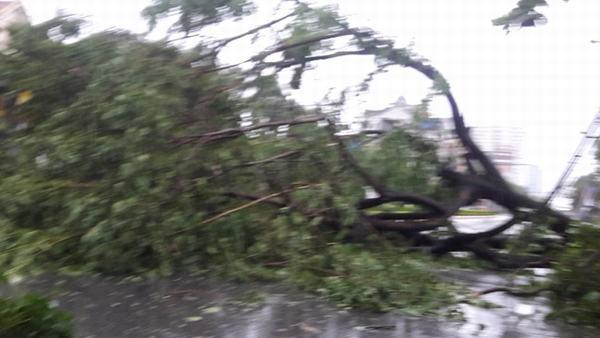 Nghệ An - Hà Tĩnh xơ xác sau bão số 2