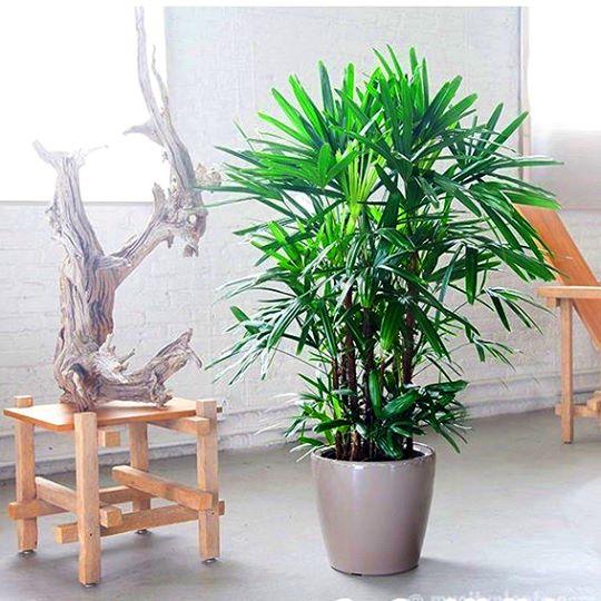 Có thể chọn các cây xum xuê để trồng trước khu vực cửa chính được làm bằng gỗ