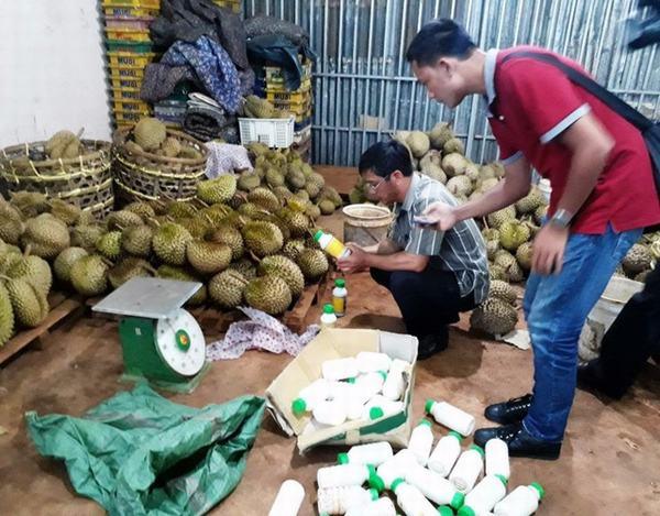 Rùng mình chiêu làm chín sầu riêng bằng phân bón lá vào buổi tối, sáng mang đi bán